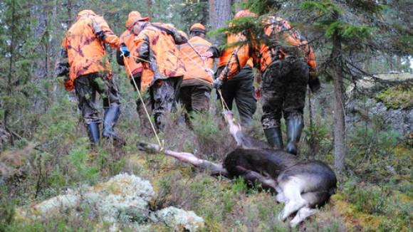 Metsästyslupa